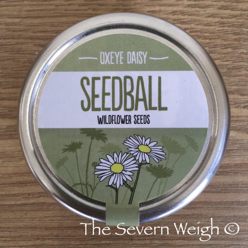 Seedball Tin: Oxeye Daisy, plastic free.