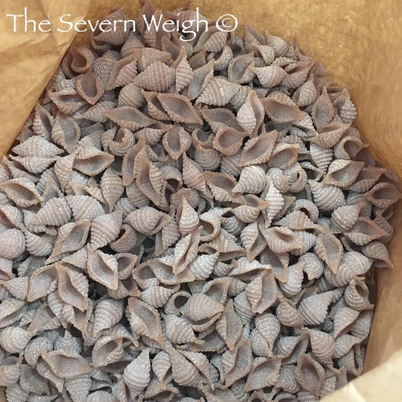 Conchiglie Wholegrain Spelt Pasta - British Artisan - Organic