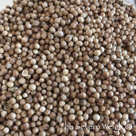 Coriander Seeds (whole) Organic