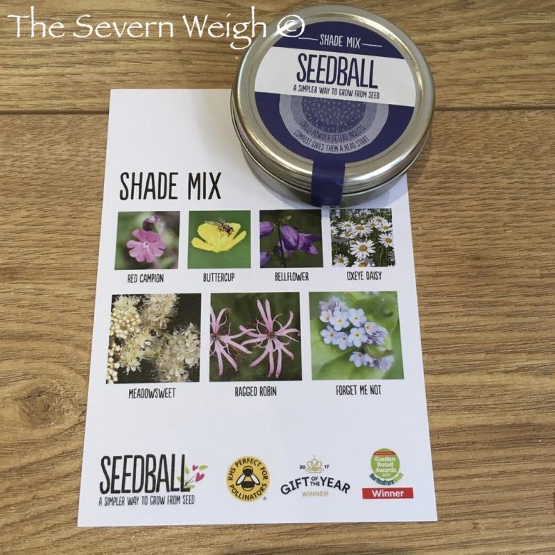 Seedball Tin: Shade Mix, plastic free.